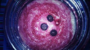 banan and morello cherry smoothie jar (7)